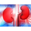 Kidney Function Items